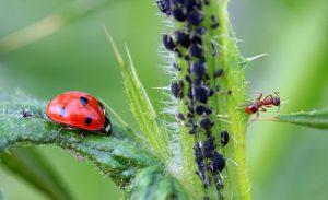 ריסוס טבעי לצמחים